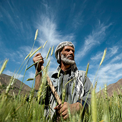 Estimation of Wheat Growing Areas in Afghanistan