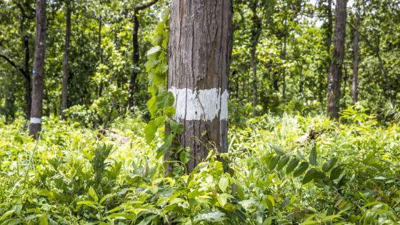 Community-based forest fire information system